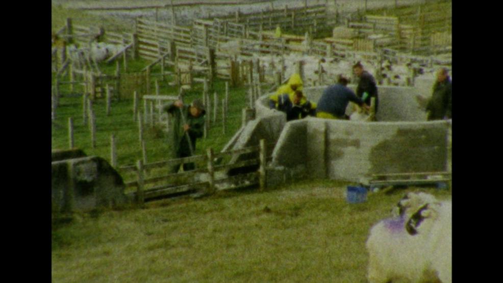 Sheep Dipping - Isle of Lewis - Scotland