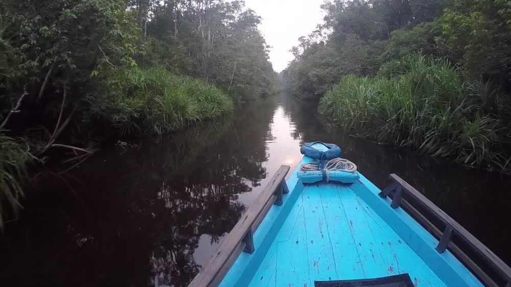 Borneo s Heart of Darkness