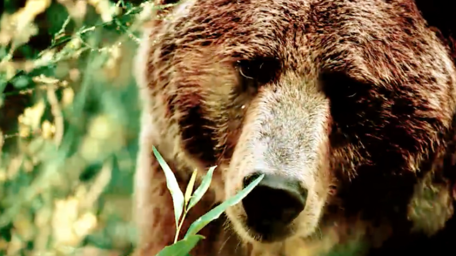 Heart of a Grizzly