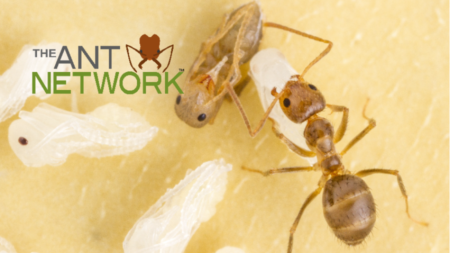 The Ant Network - Conservation Outreach & Citizen Science