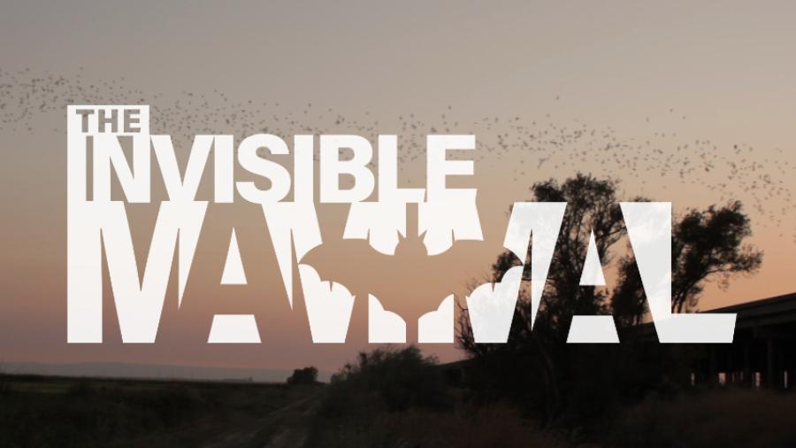 The Invisible Mammal - The Bat Rescuer