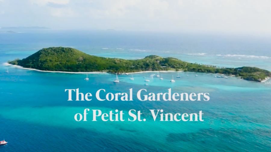 The Coral Gardeners of Petit St. Vincent