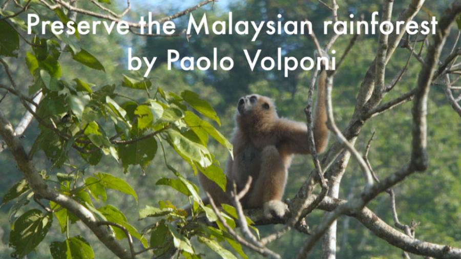 Preserve the Malaysian rainforest
