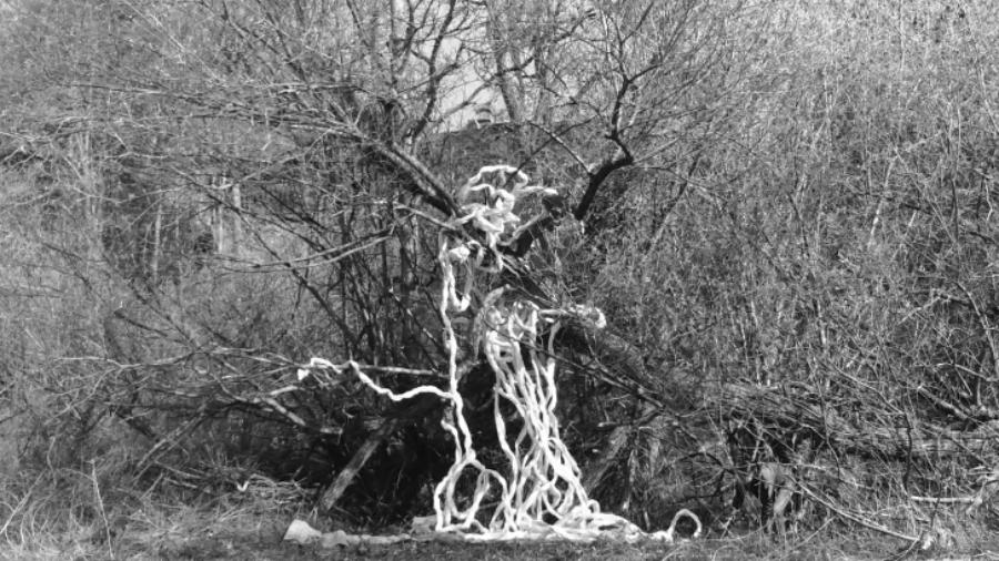 The memory of vine