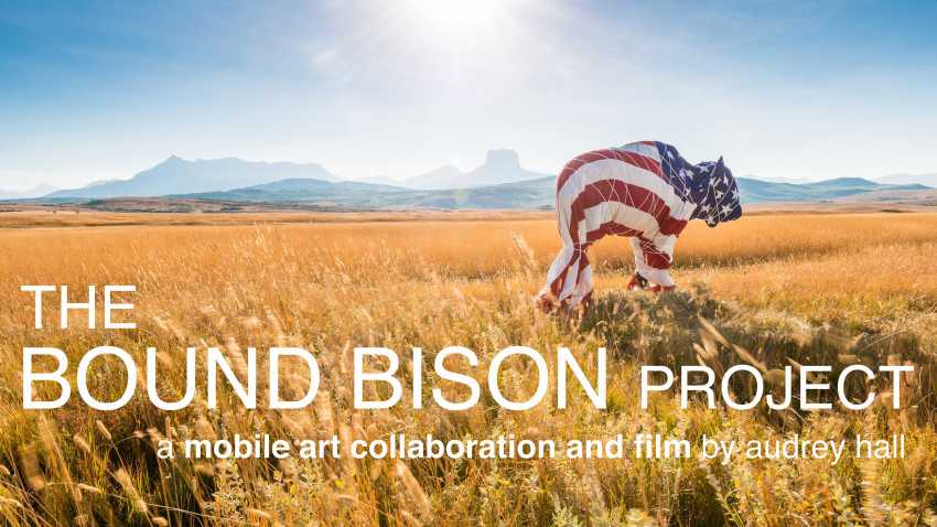 The Bound Bison Project