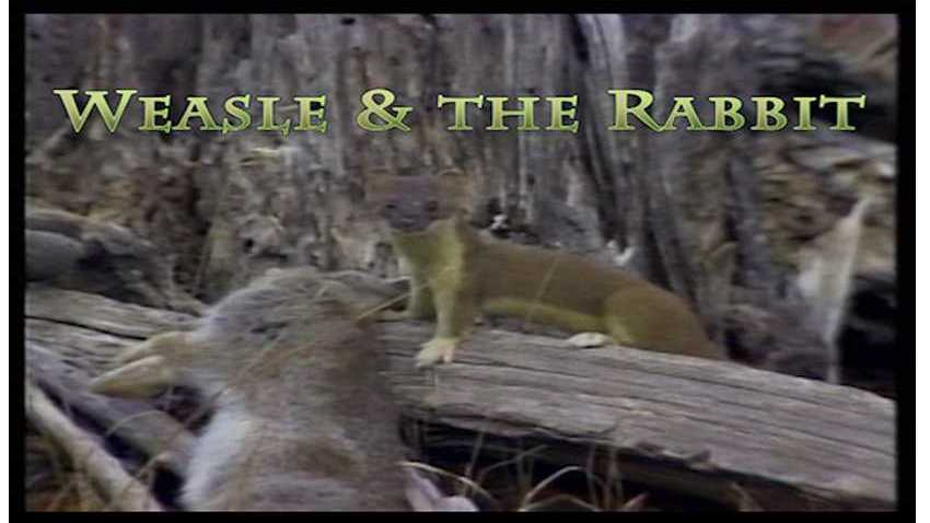 Weasle and the Rabbit